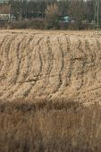 Field crops in late autumn