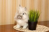 Rabbit And Grass
