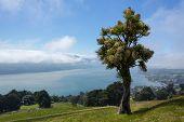 Panoramic Landscape Otago Bay Dunedin