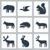 stock photo of white wolf  - Vector forest animals icons set over white - JPG