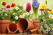 stock photo of spade  - Outdoor gardening tools and flowers - JPG