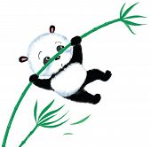 foto of wind blown  - panda jumping on bamboo blown away by the wind - JPG