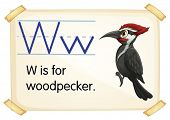 Illustration of a flashcard with letter W