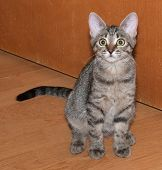 stock photo of yellow tabby  - Tabby kitten with yellow eyes sitting on background of door - JPG