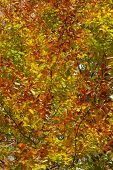 Autumn tree leaves background