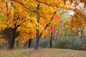 Colorful autumn trees in Michigan state park