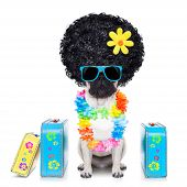 Diva Dog Vacation