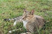 Tabby cat lying on the grass of outdoor in the cat village of Houtong, Taiwan.
