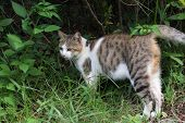 Tabby cat standing on the grassland in the cat village of Houtong, Taiwan..