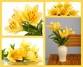 Collage of beautiful yellow lilies