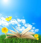 Old book with flowers, butterfly outdoors