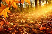 Sunlit Forest Ground In Autumn
