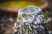 bird, cute little owl, gray and yellow beak and white feathers