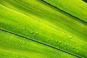 Water Droplet With Green Leaf