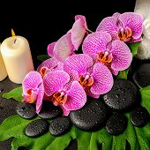 Spa Background Of Zen Stones With Dew, Blooming Twig Stripped Violet Orchid (phalaenopsis ), Stacked