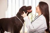 Happy Dog Visiting A Veterinarian