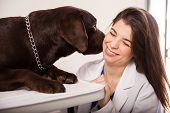 Dog Kissing Veterinarian