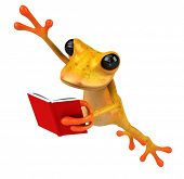 picture of orange frog  - Fun frog - JPG