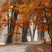 Morning sun beams in the foggy autumn park