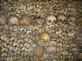 picture of catacombs  - A shot of skulls and bones in the Paris catacombs - JPG