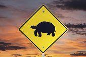 Desert Tortoise crossing caution sign with sunrise sky.