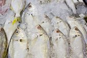 Variety Of Fresh Fish Seafood In Market Closeup Background