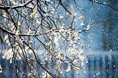 Snow Winter Weather In City Public Park