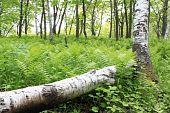 Summer Wood