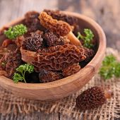 foto of morel mushroom  - fresh morel - JPG