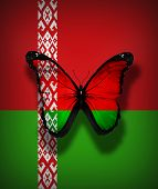 Belarus Flag Butterfly, Isolated On Flag Background