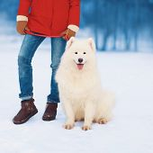 Christmas, Winter And People Concept - Woman Owner Walking With White Samoyed Dog In The Park