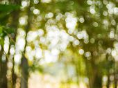 Background From Natural Light Bokeh.