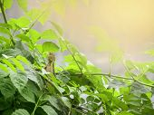 stock photo of lizard skin  - Lizard in the leaves in hot summer day looking at the camera - JPG