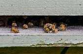 stock photo of bee-hive  - Bees land and fly through the entrance to a wooden hive - JPG