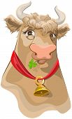 picture of cow head  - Brown head with bell cow chewing clover - JPG