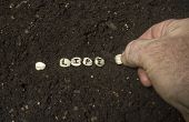 picture of rich soil  - Hand planting the seed of life in the rich garden soil - JPG