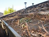 picture of gutter  - Residential house roof and gutter with flammable debris consisting of leaves  - JPG