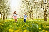 picture of orchard  - Boy goes with the girl in a blossoming orchard - JPG