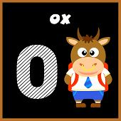 picture of oxen  - The English alphabet letter O Ox  - JPG