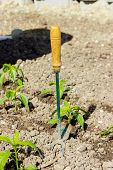 stock photo of hoe  - hoe at paprika plants in a agricultural field - JPG