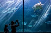 foto of sea-turtles  - Man and his daughter taking pictures of sea turtles at the aquarium - JPG