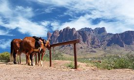 image of western saddle  - Horse tied to a post in a Wild West cowboy town - JPG