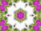 Stock Image Of African Violet Kaleidoscope