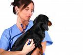 stock photo of rn  - vet and dog together - JPG