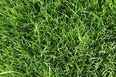 Green Grass Lawn
