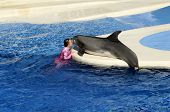 False Killer Whale With Female Trainer At Sea World