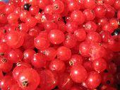 Постер, плакат: Спелые ягоды красной смородины