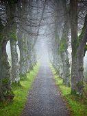 Ein Bild eine schöne Herbst-Wald-Allee