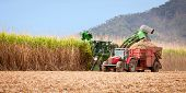 foto of truck farm  - Sugar cane harvest in tropical Queensland Australia - JPG
