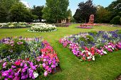 pic of manicured lawn  - Pretty manicured flower garden with colorful azaleas - JPG